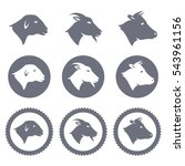 vector icons and badges of lamb ... | Shutterstock .eps vector #543961156