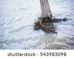 dead tree in water during flood....   Shutterstock . vector #543983098
