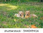 labrador puppy. | Shutterstock . vector #544049416