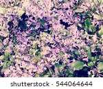 bouquet of flowers with copy... | Shutterstock . vector #544064644