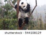 cute baby panda | Shutterstock . vector #544108129