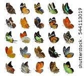 Set Of Beautiful Butterflies...