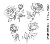 vintage roses. black and white... | Shutterstock .eps vector #544174000