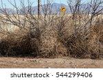 Pale Color Twigs Of Dried Bushy ...