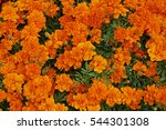 Close Up Of Flower Border With...