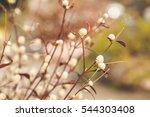 Small photo of Alternanthera dentata,Purple knight and circle of bokeh background