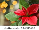 Red Flower Poinsettia Symbol O...