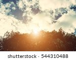 forest trees. nature green wood ... | Shutterstock . vector #544310488