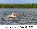 white pelican on water  danube... | Shutterstock . vector #544321270