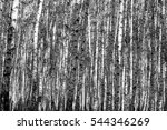 birch forest background  black... | Shutterstock . vector #544346269