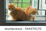 Stock photo ginger cat looking out the window the window rain cat wants to enter the house 544370170