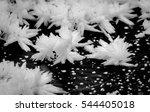 Ice Flowers On The Lake Black...