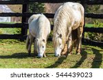 A White Haired Horse And Its...