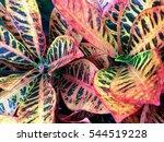 Big Colored Leaves