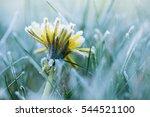 Frozen Dandelion 2