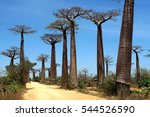 """avenue of the baobabs""  a red... 