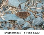 Brown Butterfly On Rocks