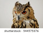 Stock photo long eared owl close up 544575376