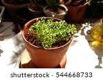 young green sprout from the... | Shutterstock . vector #544668733