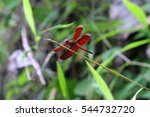 Red Dragonfly Watching On Stic...