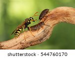closeup two little nymphs of... | Shutterstock . vector #544760170