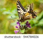 Stock photo closeup butterfly on flower with blur background 544784026