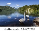 Swan Family On Alpsee In...