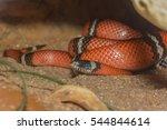 A King Snake On A Rock