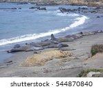 Elephant Seal Colony On The...