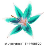 lily turquoise blue flower on a ... | Shutterstock . vector #544908520