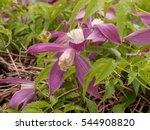 Blooming Purple Flowers In...