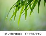 Bamboo Leaves And Drops Of...