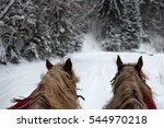 Horses Running  With The Winte...