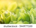 green nature with copy space... | Shutterstock . vector #544977100
