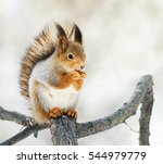 Funny Red Squirrel Sitting On ...