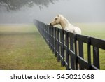 white horse in the fog in south ... | Shutterstock . vector #545021068