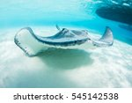 Stingray Swimming In Crystal...