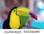 the keel billed toucan  also... | Shutterstock . vector #545200489