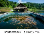 Fish Farming In The Natural...