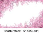 Cherry Blossom Frame Use As...