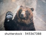 japan bear in hokkaido just say ... | Shutterstock . vector #545367388