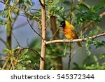 beautiful tiny and colorful... | Shutterstock . vector #545372344