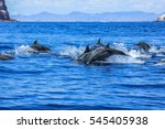 several dolphins jumping and... | Shutterstock . vector #545405938