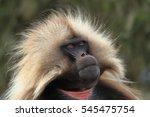 gelada baboons in the simien... | Shutterstock . vector #545475754