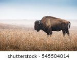 Small photo of American Bison, buffalo, profile standing in tall grass prairie with light fog in background