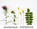 collection set of wild forest ... | Shutterstock . vector #545505229