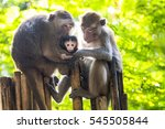 two monkeys with there baby | Shutterstock . vector #545505844