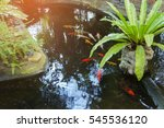 garden pond | Shutterstock . vector #545536120