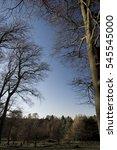 beech trees against blue sky... | Shutterstock . vector #545545000