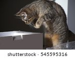 Stock photo cat jumps into the box 545595316